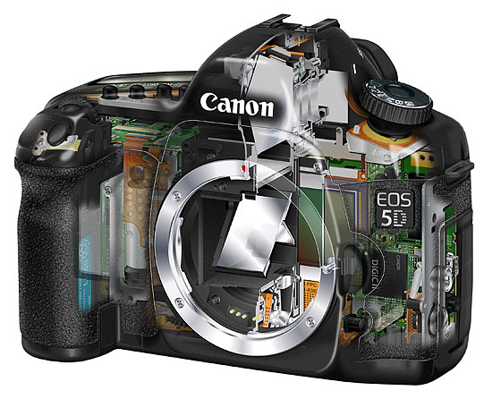 Canon 5D review roundup and sample images - Digital Photo News